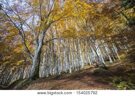 Autumn in the Foreste Casentinesi National Park in Italy.