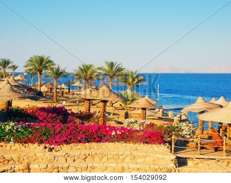 Sharm El Sheikh, Egypt - August 20, 2016: Palm tree and beach umbrellas landscape at Red Sea in Sharm El Sheikh.