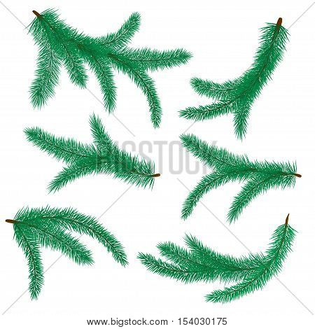 Vector illustration of fir branch. Christmas tree symbol. Set of fir-tree branches