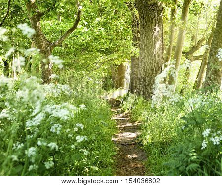 Idyllic trodden footpath trough flowers and forest, springtime scene.