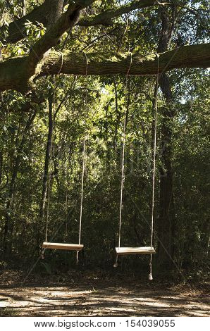 Two swings hang from a tree along a trail in a campground in Charleston South Carolina