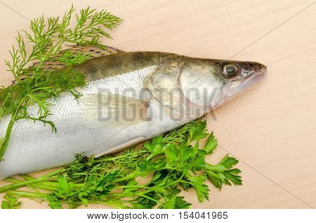 Fresh fish pike perch with herbs closeup on wooden background