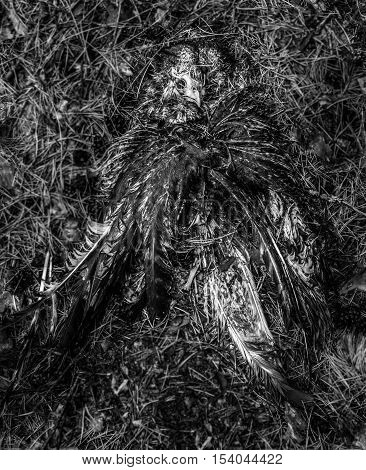 Dead bird in forest - black-white concept - background, close up