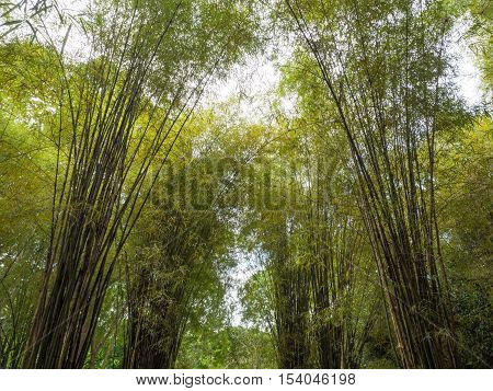 Bamboo, forest, background, green, sunny, sunshine, shinny