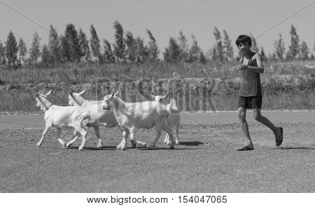 Kazan, Russia - july 14, 2013: Unidentified children with goats in Tatar village, telephoto