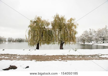 two trees in front of a lake in winter with the road in the foreground