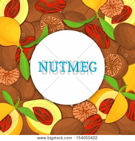 Round colored frame composed of Nutmeg spice fruit. Vector card illustration. Nutmeg nuts frame, fruit in the shell, whole, shelled, leaves appetizing looking for packaging design of healthy food