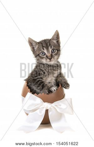 Chocolate easter egg with white ribbon with 5 weeks old tabby baby cat facing the camera isolated on a white background