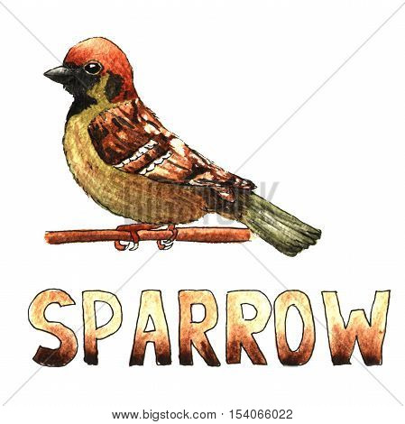 Sparrow clamber watercolor hand drawn illustration isolated on white background