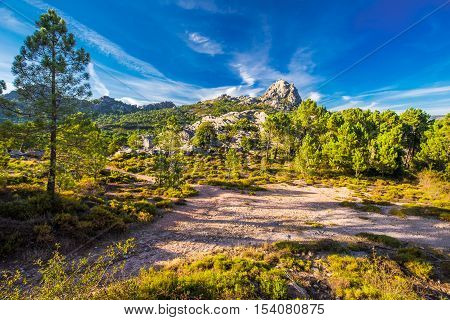 Pine Trees In Col De Bavella Mountains, Corsica Island, France, Europe.