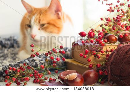 Red cat sitting on a windowsill with chestnuts and books. Autumn cat