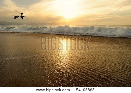 Sunset ocean birds is a golden seascape with a flock of seabirds flying by as a gentle wave rools to shore.