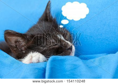 kitten with cloud copy space on blue