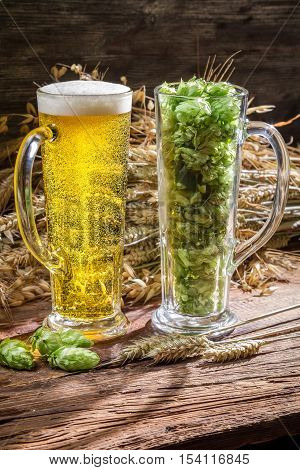 Ears Of Wheat In Gold Surrounded By Fresh Beer Hops
