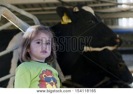 Farm girl with cows in a milking facility on July 07 2013.The income from dairy farming is now a major part of the New Zealand economy becoming an NZ$11 billion industry by 2010.