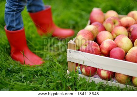 Crate With Red Organic Apples And Children Boots