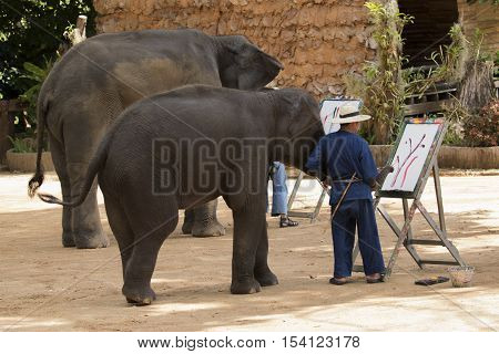 Mahout trains wild elephant to paint picture for tourism in thailand.