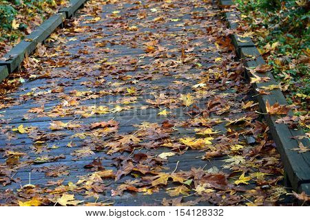 yellow brown fall leaves scattered along boardwalk
