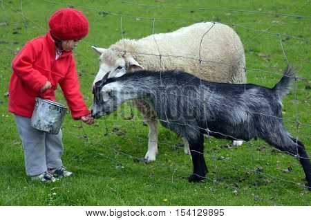 Little Girl Feed Animals