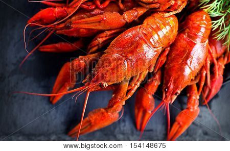 Red boiled crayfish or crawfish with lemon and herbs on stone slate dark background. Lobster closeup. Crayfish party