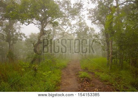 Walking way in national park of Chaiyaphum of Thailand with foggy climate