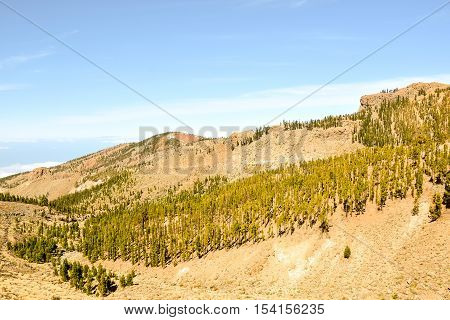 Pine Tree Green Forest