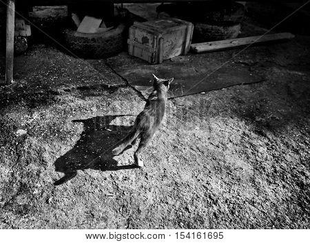 Cat with fish in mouth and her shadow in monotone