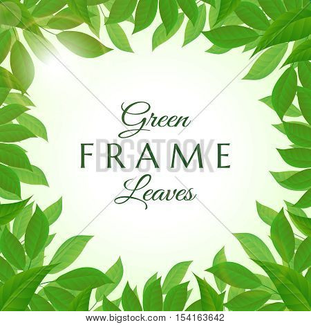 Fresh and lush green leaves frame vector illustration
