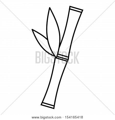 Bamboo icon. Outline illustration of bamboo vector icon for web