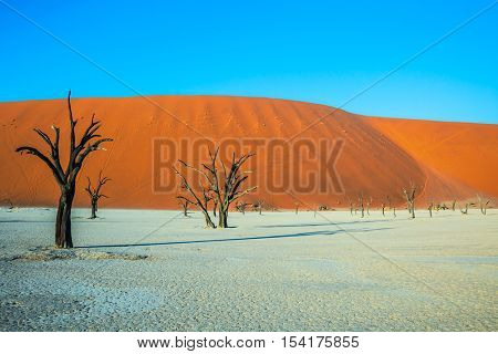 Evening. The bottom of dried lake Deadvlei, with dry trees. Ecotourism in Namib-Naukluft National Park, Namibia