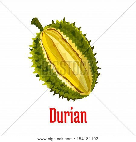 Durian. Vector isolated exotic tropical durian fruit icon. Durio slice cut along with fresh juicy unusual tasty pulp