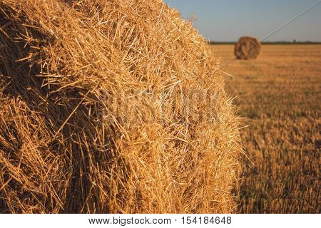 Stack of dry hay. Yellow straw under sunlight. Respect labor and cherish peace. Fields feed the country.