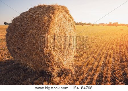 Bale of hay. Mown field and clear sky. Life and labor. Season of harvest demands work.