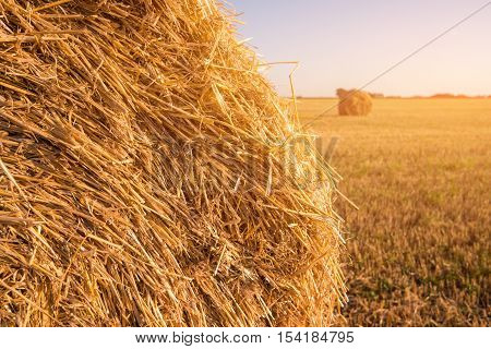 Haystack on field background. Bale of straw. Feed for domestic animals. Season of harvests is over.