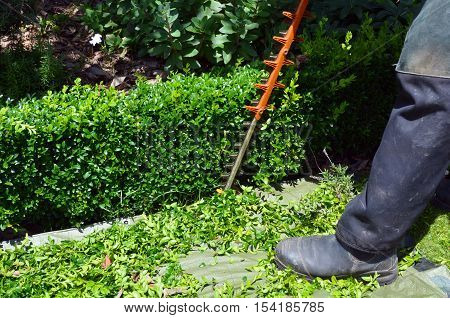 Gardener trimming plants in a garden with a trimmer.