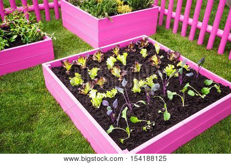 Beautiful herb garden. Pink raised beds with herbs and vegetables. Trendy garden design