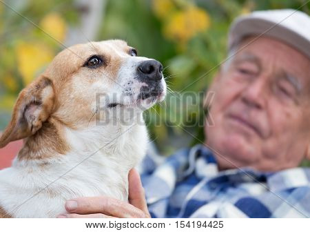 Senior Man With Dog In Courtyard