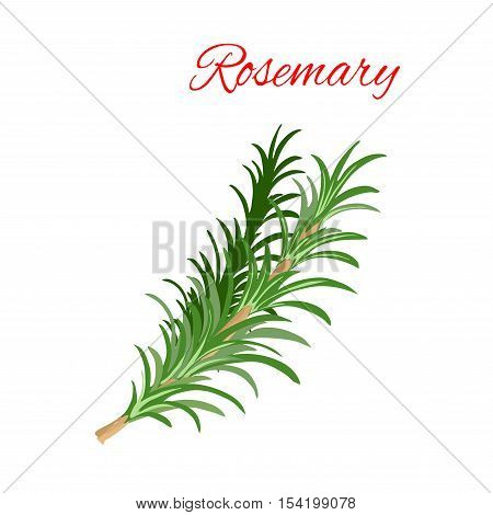 Rosemary culinary herb branches vector icon. Aromatic spice herbal condiment emblem of green rosemary branch with leaves for cooking ingredient package sticker, label design element