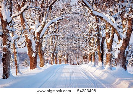 Alley in snowy morning with beautiful trees on the sides