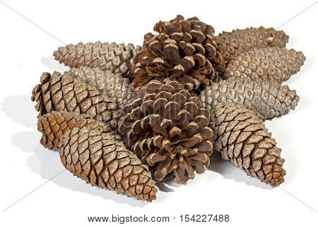 Many Natural Brown Pine Cone Patterns And Textures