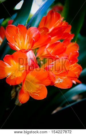 A bunch of red and orange flowers in a botanic garden