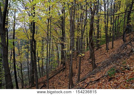 Autumn Slope