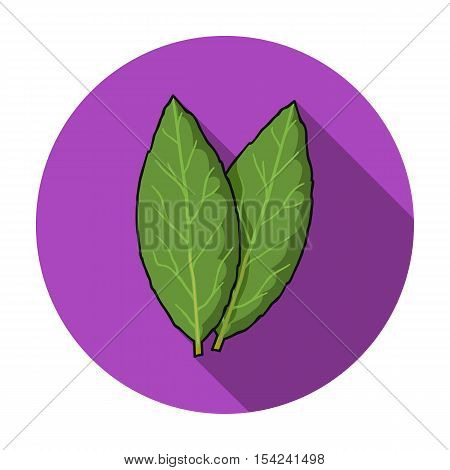 Laurus icon in flat style isolated on white background. Herb an spices symbol vector illustration.