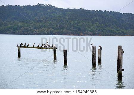 Remnants of a rustic wooden pier taken in Pt Reyes, CA