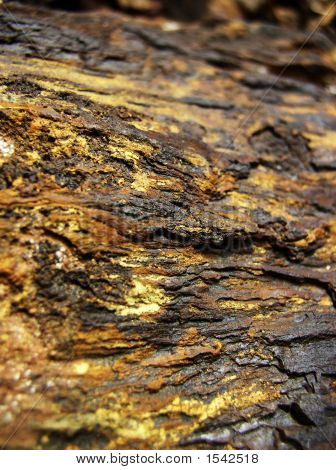 Gold Colored Petrified Wood Texture Background