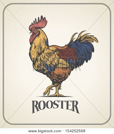 Rooster. Illustration of the cock in Vintage engraving style. Rooster colorful grunge label. Sticker image for the farms and manufacturing depicting roster. Grunge label for chicken product.
