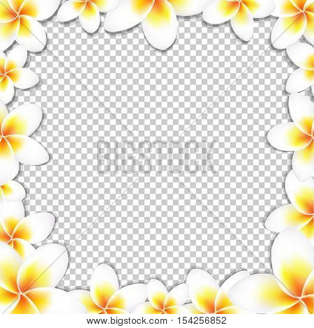 Frangipani FrameWith Gradient Mesh, Isolated on Transparent Background, Vector Illustration