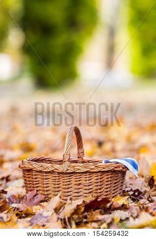 Empty wicker basket on golden autumn leaves in forest. Empty basket for your products.