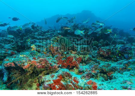 Colorful Tropical Coral Reef Landscape
