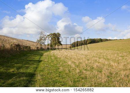 Meadows In Autumn